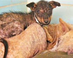 Mangy Puppy Clung To Sick Mom As Every Inch Of Her Skin Ached