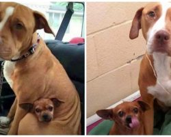 Pair Of Bonded Shelter Dogs Cry If Anyone Tries To Separate Them