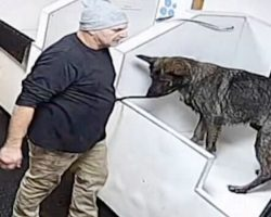 Man Takes Shepherd To Self-Service Pet Wash Station & Punches Him Repeatedly