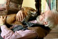 Man Adopts Fox After Saving Him From Euthanasia And Established An Intense Friendship