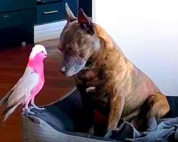 Depressed Dog Cries All Day After The Injured Bird He Saved Heals & Flies Away