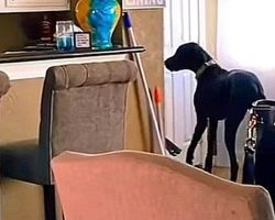 Dog Loves New Puppy So Much, He Starts Stealing Treats From The Pantry For Him