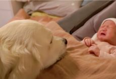 New Baby Let Out Sad Scream, Confused Dog Drew Closer In & Mom Gulped
