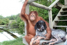 12 Dogs With Their New Non-Dog Friends
