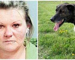 Sickly Animals Cry Out As Owners Drive Away & Abandon Them In Dirty Vacant Lot