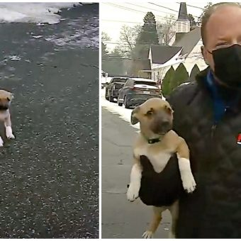 Tiny Puppy Hops Fence, Runs Into Reporter's Weather Segment On Live TV