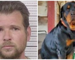 Gentle Giant Rottweiler Gives All To Prevent Robber From Entering Country Store
