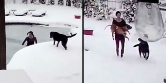Woman Jumps Into Frozen Pool To Save Her Dog But The Dog Had Already Gone Limp