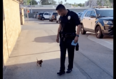 Stray Dog Loses His Cool When He Spots Officer. Chases Cop Down Street