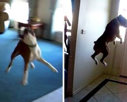 Man Asks Dog If He Wants To Go For A Walk, And The Dog Starts Flying In The Air
