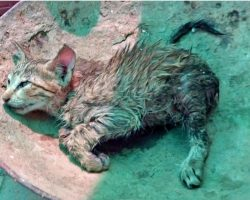 Wet Kitten's Collapsed Body Labored To Breathe As Rain Continued To Fall