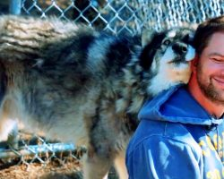 Veteran With PTSD Wanted To Give Up, Then A Wolf Walked Up And Gave Him A Hug