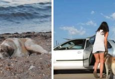 Woman rescues a lonely stray dog she found on the beach