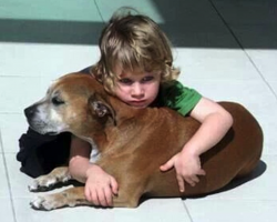 A Dog's Purpose According To A 6 Year Old