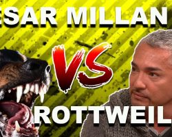 """Cesar Millan: How To Use The """"Redirection Method"""" To Calm An Overprotective Rottweiler"""