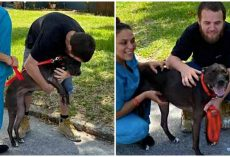 Man Tearfully Reunites With Dog He Had To Surrender When He Became Homeless