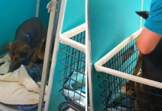 Old Dog Could No Longer Walk, So He's Placed In A Cart For Euthanasia That Day