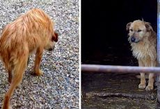 Shelter Dog Who Walked With Her Head Lowered & Tail Tucked Gets A Second Chance