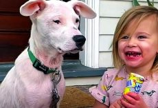 2-Year-Old Girl Gets Attached To Deaf Homeless Puppy And Begs Mom To Adopt Him