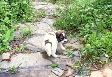 Stray Puppy Sees A Stranger And Asks Her To Follow Him Through A Deserted Path