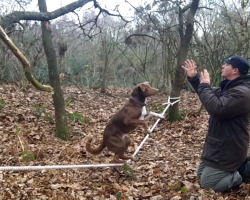 Welsh Border Collie-Kelpie Executes An Incredible Balancing Act