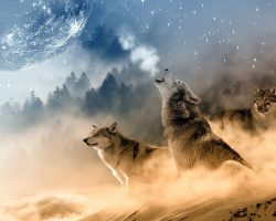 The Two Wolves