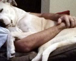 10 Snuggliest Dog Breeds Ever