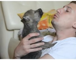 Man Teaches Wolf Pup How To Howl & Captures It All On Video