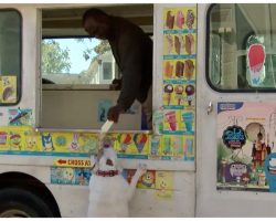 Smart Bulldog Knows Ice Cream Truck Music – Now He's The Guy's Best Customer