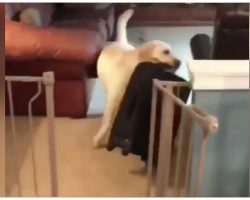 Dog Steals Owner's Suitcase To Prevent Him From Going On A Trip
