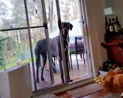 Dad Tells Great Dane It's Time For A Bath – And He Knows Precisely What To Do