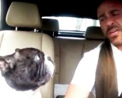 Dad Sings Funniest Carpool Karaoke With His Frenchie, Records The Whole Thing