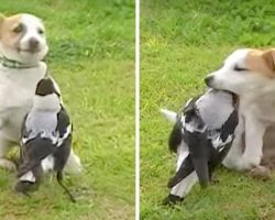 Goofy Dog Befriends Equally Comical Magpie, What They Do Together Is Outrageous
