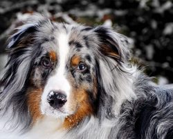 Canine Astrology: Breeds and Dog Personality Traits That Match Your Star Sign