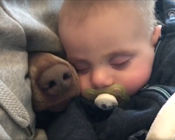 Mom's filming the baby taking a nap when a nose pokes through beside him