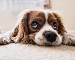 9 Signs To Look For To Know If Your Dog is Unhappy