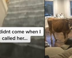 Mom Lets Dog Out And Doesn't Close The Door, And Pup Returns With A Friend