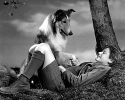 Dogs in History: Pal, the Wonder Dog Behind Lassie