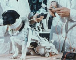 Dogs in History: The Story of Laika the First Space Dog