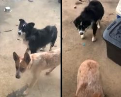 Guy Goes To Check On His Dogs, Sees Them Outside With A New Friend