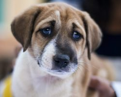 How To Keep Your Dog Healthy During a Depression Phase