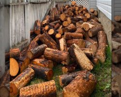 Stick-Loving Dog Blends In With The Giant Pile Of Logs