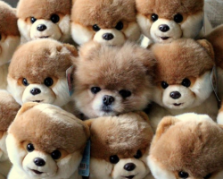 15 Pets Who Are The Absolute Masters Of Disguise