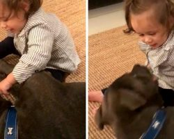"""Baby Shoves Her Finger In Pit Bull's Mouth & Dog """"Launches"""" Himself At Her Face"""