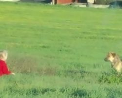 People Couldn't Get Close To This Stray, But A Little Girl Would Get Through To Her