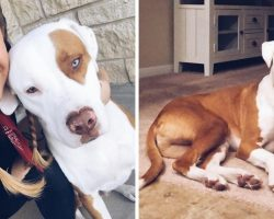 Dog Passes After 'Common' Mistake And Dog Owner Posted Warning To Help Save Others