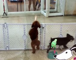 """Dancing Dog Breaks Out Into """"Dance Routine"""" When Mom Returns To Doggie Daycare"""