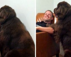 """Attention-Seeking Dog Is Humiliated When Dad Ignores Him So He Plans An """"Attack"""""""