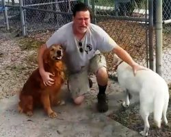 Veteran Wakes Up In ICU After Accident & Finds Out Neighbor Gave Away His Dog