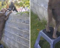 Family Gives Their Dog A Step Stool So He Could Visit His Buddies Across The Wall